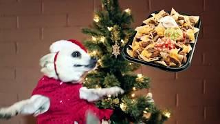 Singing Chihuahua - Christmas Song 2:  Jingle Bells