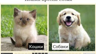Кошка или собака ?  Кого выбрать ?