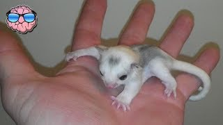 Top 10 Strange Animals You Can Own As Pets