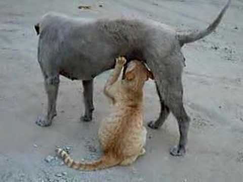 Can Dogs Eat Cat Food Yahoo Answers