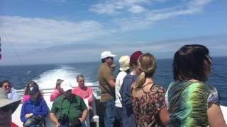 Whale watching New England Boston harbor 06-2017