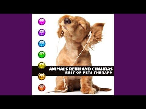 Reiki Training with Dog - YouTube