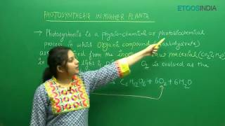 Photosynthesis In Higher Plants | NEET Class 11th | Biology By Shivani Bhargava (SB) Mam