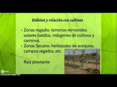 Endoparaziták és vegetáriánusok