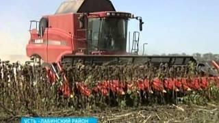 Почти 39 центнеров подсолнечника с гектара убирают кубанские аграрии