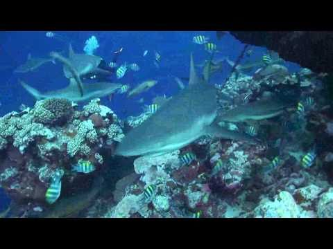 Diving Yap Island, Micronesia, Yap allgemein,Yap,Mikronesien