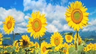 Glen Campbell - Sunflower (album 1977: Southern Nights) - video compilation by bowiart