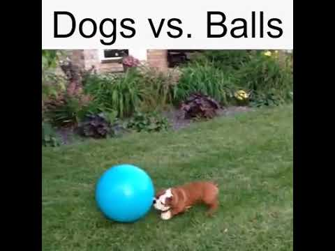 Dogs Vs Balls!!! Compilation