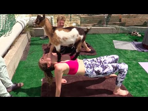 GOAT YOGA And Getting FIT w/ Bart Baker | VLOG