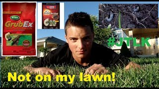 How & When To Treat Grub Worms In the Lawn