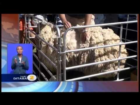 SABC NEWS 2013 Bloem Show Tiisetso and Mamello Makhele