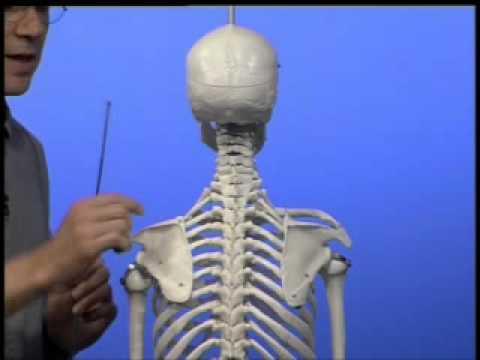 Vertebrologie Rückenschmerzen
