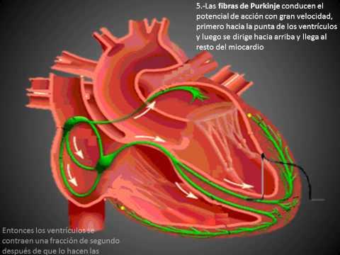 Donde la medida más a menudo la presión arterial