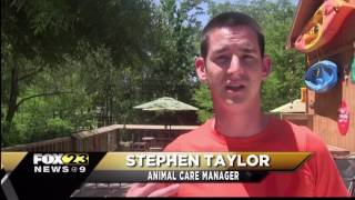 Hattiesburg Zoo prepares for its birthday bash