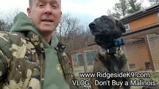 VLOG - Dont Buy A Belgian Malinois‼ Whats Your Thoughts❓