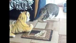 кот vs тигр