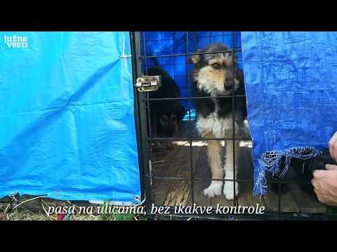 Napravila prihvatilište za pse u Lepaji, komšije zbog buke i smrada negoduju