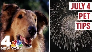 How to Keep Your Dog Calm During 4th of July Fireworks | NBC New York