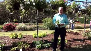 In the Garden with Dave - Fall Plants for North Texas: Veggies