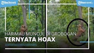 Viral Video Harimau Besar Muncul di Hutan Grobogan Ternyata Hoax, sang Penyebar Minta Maaf