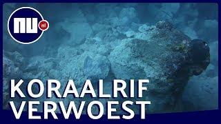 Mobiel olieplatform vernielt koraalrif bij Curaçao   NU.nl