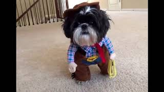 Dog Compilation | DOG IN COSTUME - Funny Video By PRIDE 6