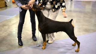 Great Video On Doberman Structure