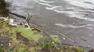 Рыбалка ульяновск юрманский заливка