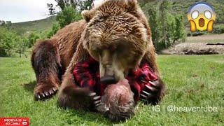 Os animais não tem sentimentos!!! Será mesmo??  Who says they have no feeling ???