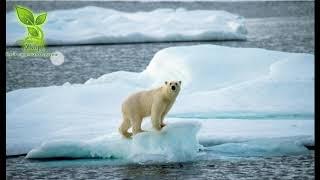 الصحافة البيئية لماذا لا ...
