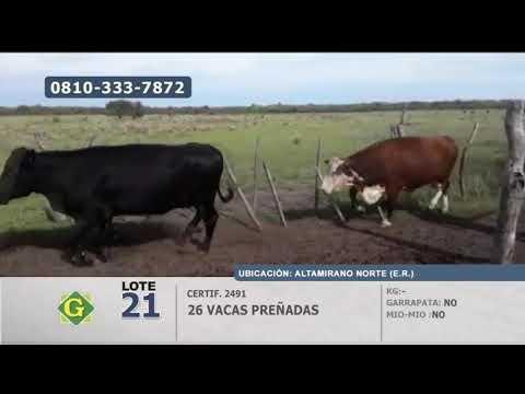 Lote Vacas preñadas en Altamirano Norte (Entre Ríos)
