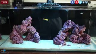 How to Start a Reef Aquarium The Right Way