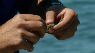 Сезон рыбалки когда на каспийском море