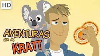 Aventuras Con Los Kratt 🐨 Canguros Y Koalas | Videos Para Niños