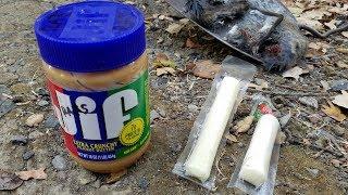 A Rat Bait Better Than Peanut Butter??