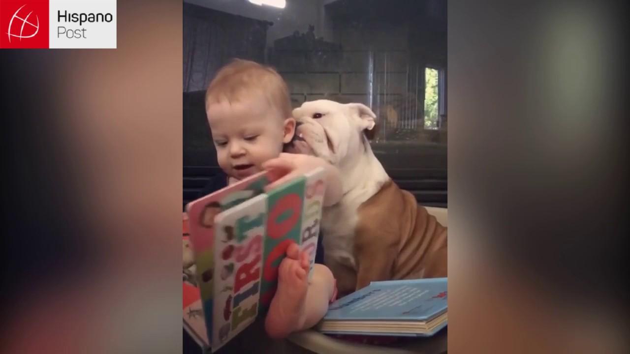 Perro besa a un bebé y le provoca carcajadas