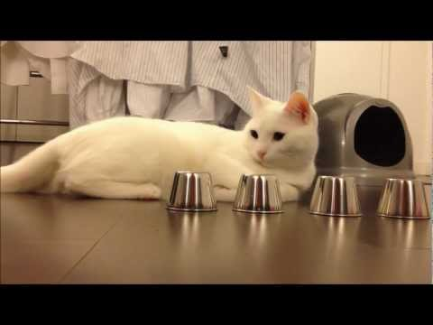 Smart Cat Performs AMAZING Trick