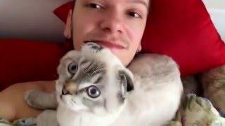 ТОП 5 Лучшие видео Кот будит хозяина. Best Funny Cats Waking Up Owners Compilation.