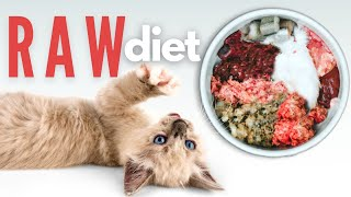 How To Start Your Kitten On A Raw Diet - The Ultimate Guide