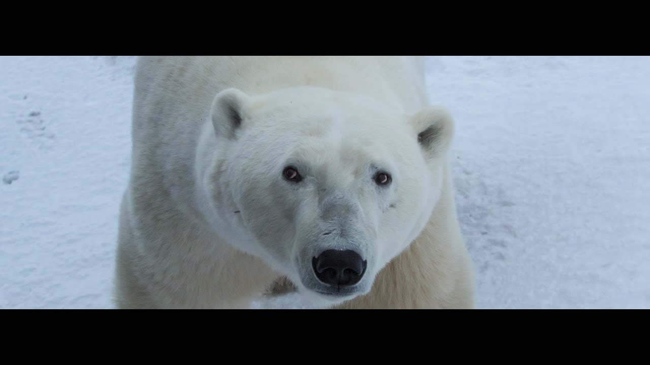 Explore the Polar Bear Capital of the World with Google Maps
