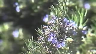 HERB MAGIC  -  SCOTT CUNNINGHAM