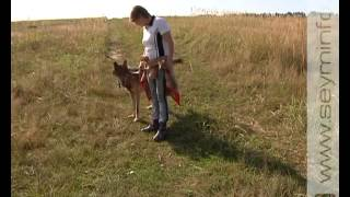 Курский фермер вырастил волка