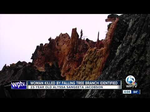 Woman killed by falling tree branch in Boca Raton ID'd
