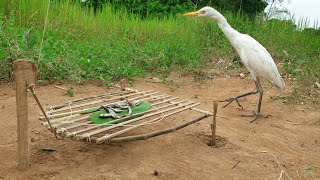 Egret Bird Trap Using Bamboo Branches