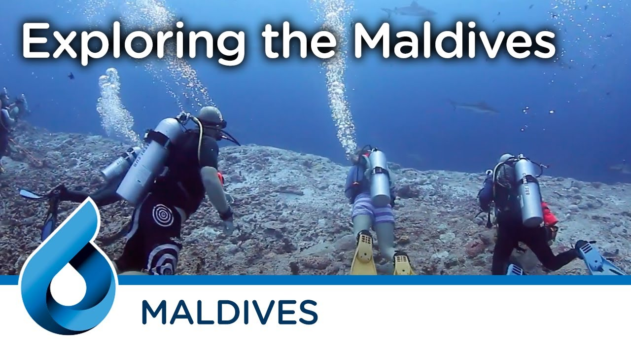 Maldives liveaboard Trip