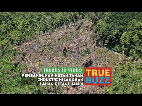 Pembangunan Hutan Tanaman Industri Hilangkan Lahan Petani Jambi