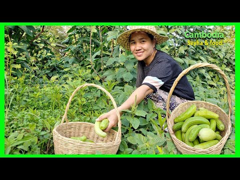 Picking Fresh cucumber In Farm! And Make Delicious Food for My Grandparents! Rural Khmer Food.