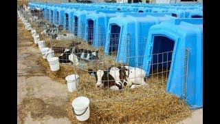 Почему животноводство хуже живодёрства?