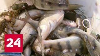Когда начнется весенний запрет на рыбалку