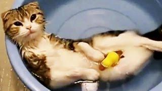 Die besten Katzenvideos im Web